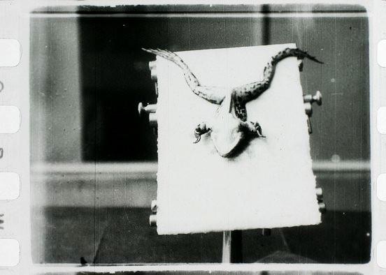 Život zabité žáby, režie: Bohumil Bauše, 5 min, 1911