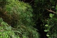 Botanicka zahrada – výstava