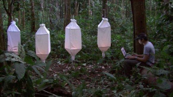 Ursula Biemann, záběry z videa Biosémiotické Borneo, 2016