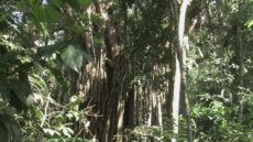 Ursula Biemann, videostills from Biosemiotic Borneo, 2016